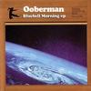 Couverture de l'album Bluebell Morning - EP