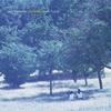 Couverture de l'album Insulation