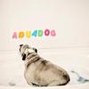 Couverture de l'album Aquadog