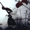 Couverture de l'album Sonnambula