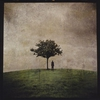 Couverture de l'album The Burial Tree (II)