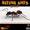 Couverture de l'album Biting Ants Riddim