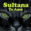 Couverture de l'album Te Amo