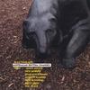 Couverture de l'album Australian Rhythm Changes