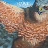Cover of the album The Hawk - EP