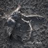 Couverture de l'album Barren