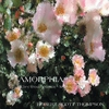 Cover of the album Amorphia
