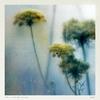 Couverture de l'album Colour Is Breathe (Remixes)