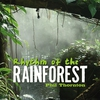 Couverture de l'album Rhythm of the Rainforest