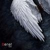 Cover of the album Volar
