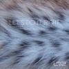 Couverture de l'album Let's Do It Right - Single