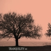 Cover of the album Tranquility 005