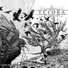 Couverture de l'album Like Crows for the Earth
