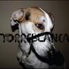 Cover of the album Defensa
