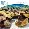 Cover of the album Fragile Reef