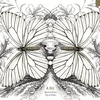 Cover of the album Butterflies Fly in Pairs (feat. Ryan J. Lee & Tom Kennedy)