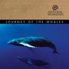 Couverture de l'album Journey of the Whales