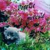 Cover of the album L'oreille musicale
