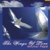Couverture du titre Les ailes de lumière