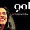 Couverture de l'album Gal canta Caetano
