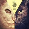 Cover of the album Kitties on Remix