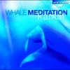 Cover of the album Whale Meditation