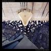 Couverture de l'album Flags of Delusion